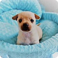 Adopt A Pet :: Rowdy - Montgomery, TX