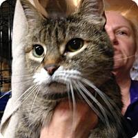 Adopt A Pet :: Toots-URGENT - Herndon, VA