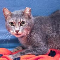 Adopt A Pet :: TCR 39 - San Angelo, TX
