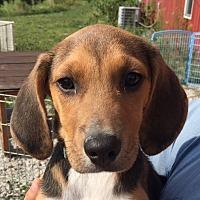 Adopt A Pet :: Triton - Indianapolis, IN