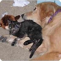 Adopt A Pet :: Sunny - Davis, CA
