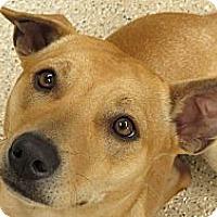 Adopt A Pet :: Monti (courtesy) - Scottsdale, AZ