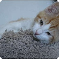 Adopt A Pet :: Motley - Davis, CA