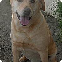 Adopt A Pet :: Daisy will die tomorrow - Sacramento, CA
