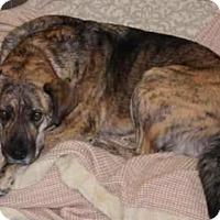 Adopt A Pet :: Momba - Saskatoon, SK