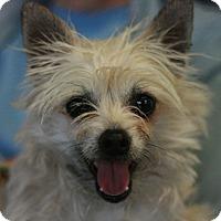Adopt A Pet :: Skippy - Canoga Park, CA