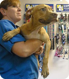 Pit Bull Terrier Mix Dog for adoption in Fort Walton Beach, Florida - Roxanne