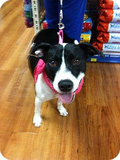 Hound (Unknown Type) Mix Dog for adoption in Asheboro, North Carolina - Bobbi