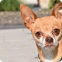 Adopt A Pet :: Ramsey - Meridian, ID