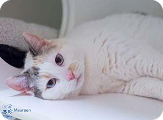 Calico Cat for adoption in Merrifield, Virginia - Maureen