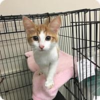 Adopt A Pet :: Nina - Suwanee, GA