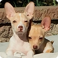 Adopt A Pet :: James - Las Vegas, NV