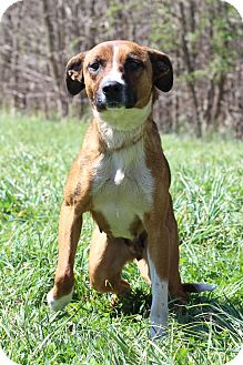 Shepherd (Unknown Type) Mix Dog for adoption in Waldorf, Maryland - Cassie