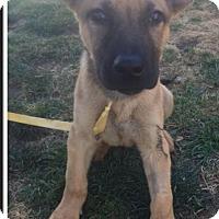Adopt A Pet :: Lala - Brea, CA