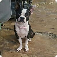 Adopt A Pet :: Portia - Weatherford, TX