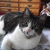 Adopt A Pet :: A Courtesy Post-Dany - Elmsford, NY
