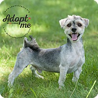 Adopt A Pet :: Tyler - Staten Island, NY