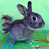Adopt A Pet :: Ginger - Scotts Valley, CA