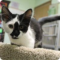 Adopt A Pet :: Jacques - Murphysboro, IL