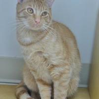 Adopt A Pet :: Zooey - Chambersburg, PA