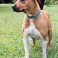 Adopt A Pet :: Destiny - Midlothian, VA