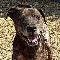 Adopt A Pet :: Marley - Portland, OR