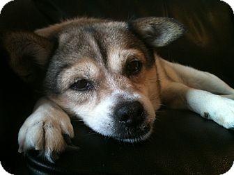 Terrier (Unknown Type, Medium)/Chihuahua Mix Dog for adoption in Harrisonburg, Virginia - Rosie