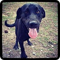 Adopt A Pet :: Mason - Houston, TX