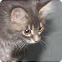 Adopt A Pet :: Chloe - Richfield, OH