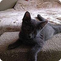 Adopt A Pet :: Monster - Chandler, AZ