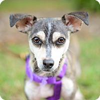 Adopt A Pet :: Corban - Mission Viejo, CA