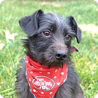 Adopt A Pet :: Gusty - Mocksville, NC