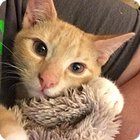 Adopt A Pet :: Charles - Pittstown, NJ