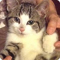 Adopt A Pet :: Hershey - Sunderland, ON