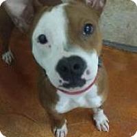 Adopt A Pet :: Julie - Terrell, TX