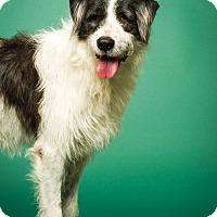 Adopt A Pet :: Weezel - Gentle boy - meet him - Norwalk, CT