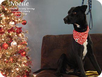Labrador Retriever Mix Dog for adoption in Bucyrus, Ohio - Noelle