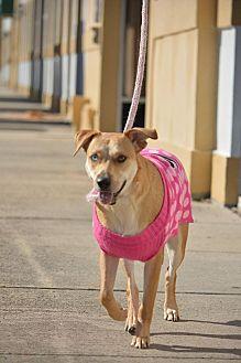 Australian Shepherd/Labrador Retriever Mix Dog for adoption in Houston, Texas - Sally