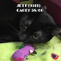 Adopt A Pet :: JETT - Flint, MI