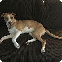 Adopt A Pet :: Ken - ROSENBERG, TX