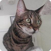 Adopt A Pet :: Nellifer - Davis, CA