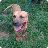 Adopt A Pet :: Howard in Ft Mitchell KY - Richmond, VA