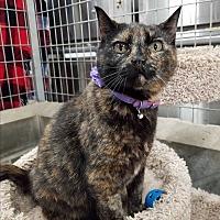 Adopt A Pet :: Wanda - Montgomery City, MO
