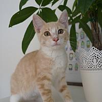 Adopt A Pet :: Tako - Highland Park, NJ