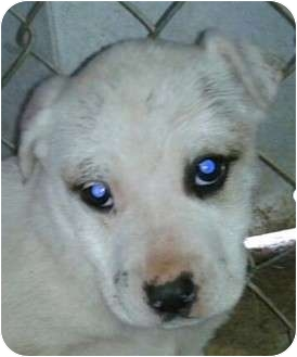 Terrier (Unknown Type, Medium) Mix Puppy for adoption in Remlap, Alabama - Dolly