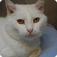 Adopt A Pet :: Duchess - Miami, FL