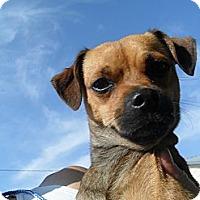 Adopt A Pet :: Rider #5196 - Jerome, ID