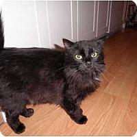 Adopt A Pet :: Brandy - Warren, MI