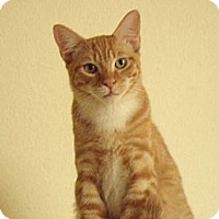 Adopt A Pet :: Randy-handsome & social - Scottsdale, AZ