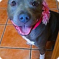 Adopt A Pet :: Greycee - Pasadena, CA